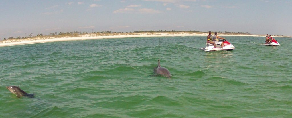 Jet ski tours, Dolphin tours to shell island in panama city beach florida