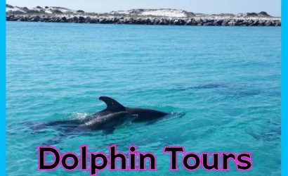 best places dolphin tour