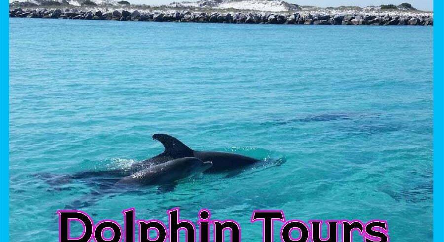 best places dolphin tour