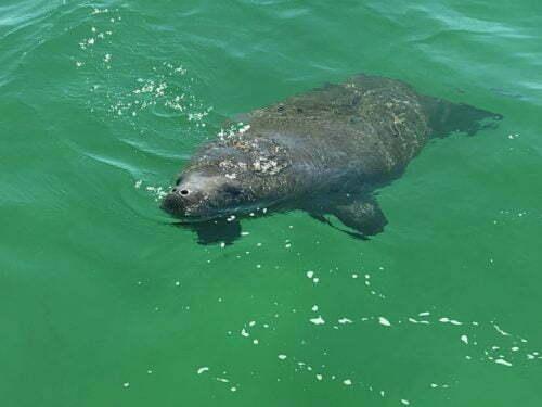 JetSki Tours | Shell Island Dolphin Tours Panama city Florida