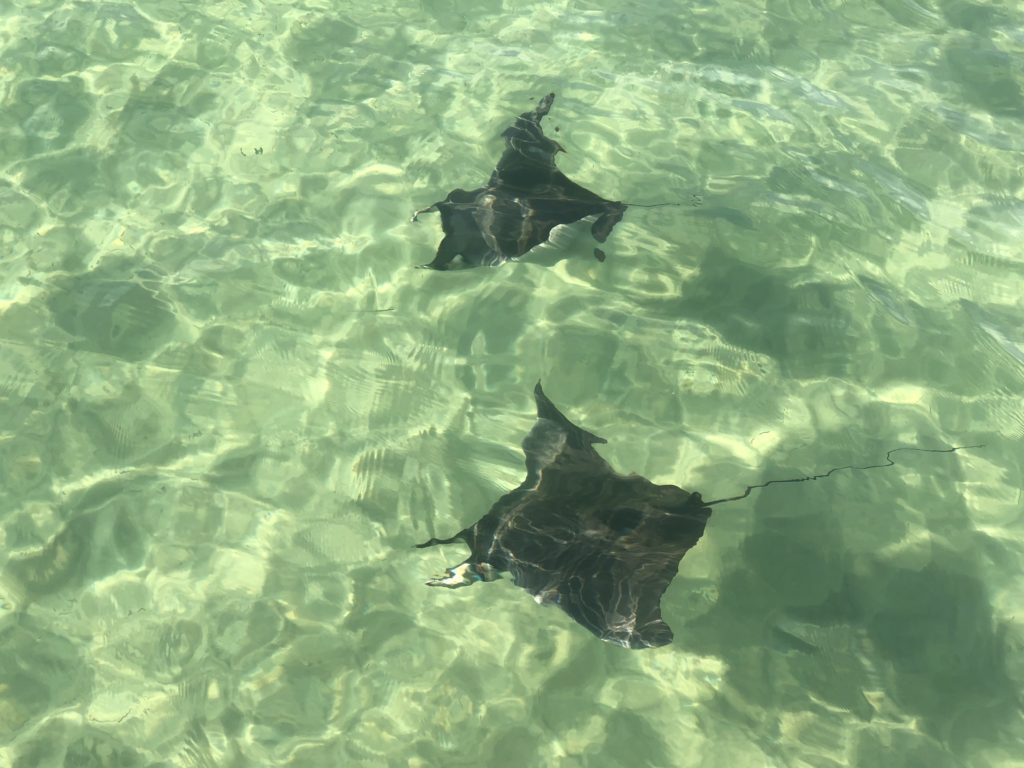 rays shell island eco tours