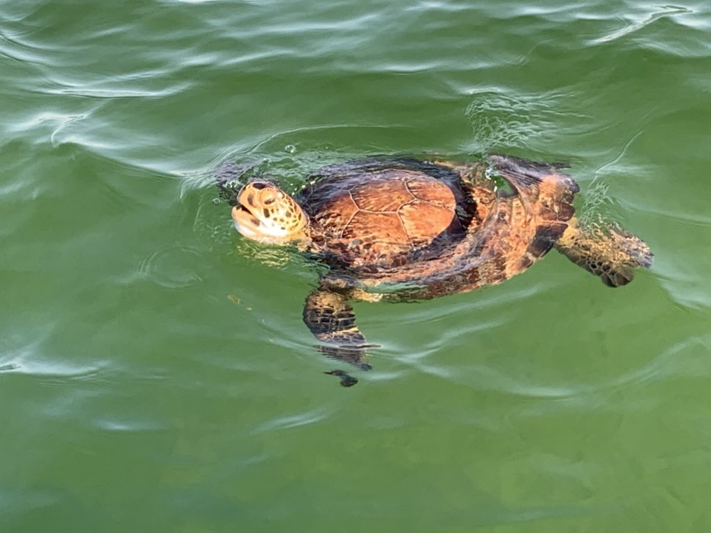 wildlife eco tours to shell island