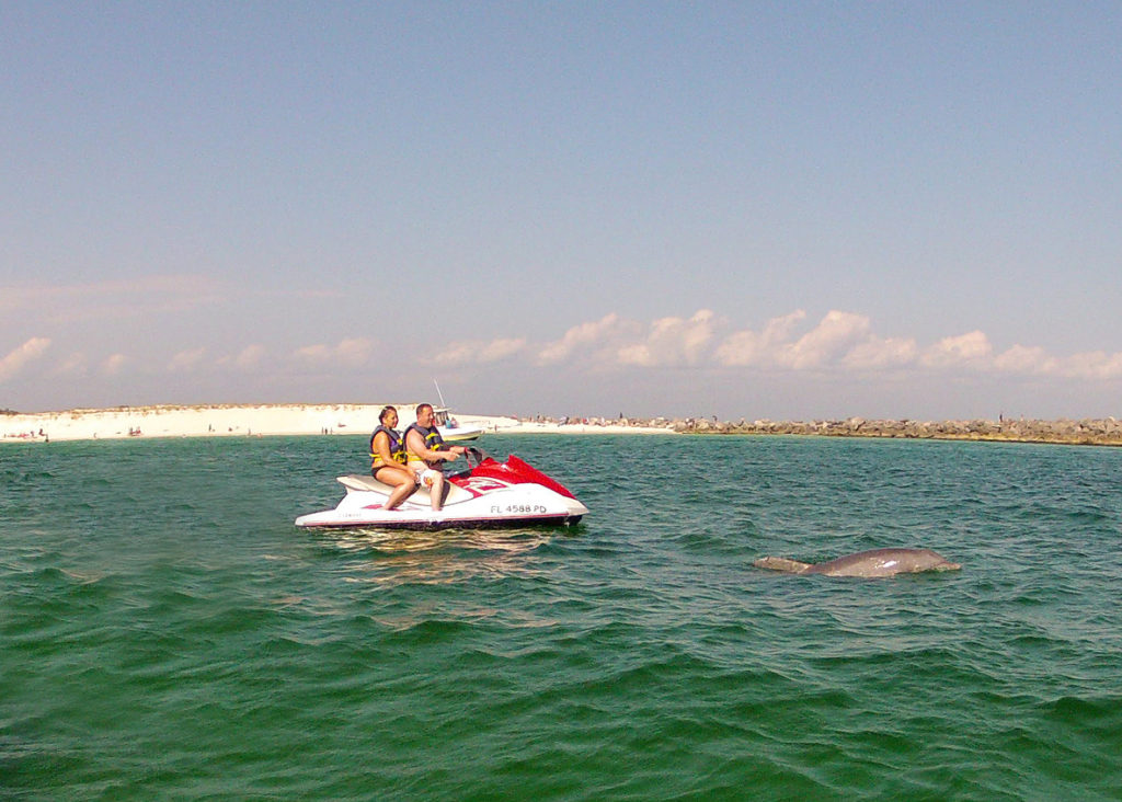 JetSki Rentals | Shell Island Dolphin Tours Panama city ...