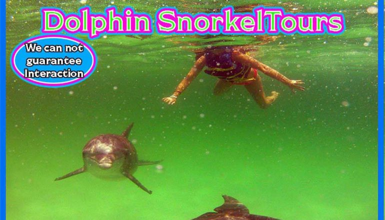 dolphin snorkel tours swim with dolphins